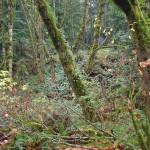 La biodiversidad evita el colapso de los ecosistemas ante incendios o sequías