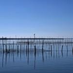 La Comunidad Valenciana aborda el nuevo plan rector del parque de L'Albufera