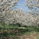 Actividades Ambientales en Semana Santa