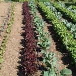 Jóvenes malagueños apuestan por el autoempleo en agricultura sostenible
