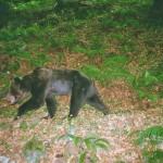 """El proyecto """"Frutos para el oso"""", entre los seis mejores del mundo"""