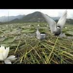 WILD10 Vídeo Promocional
