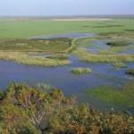 Gas Natural defiende la viabilidad ambiental de su proyecto en Doñana