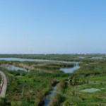 El Tancat de la Pipa, de arrozal a humedal restaurado
