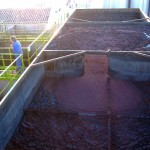 Residuos de aceituna para la mejora de suelos mineros