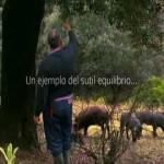 Paisajes: La dehesa, ejemplo de sostenibilidad