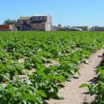 La agricultura y ganadería ecológica de la Comunitat Valenciana en fase de expansión