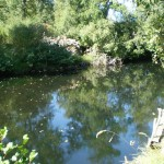3,3 Millones de Euros para la restauración ambiental del río Negro, Zamora