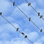 Red Eléctrica cartografía las rutas de las aves para evitar colisiones