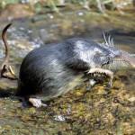 La Comisión de Patrimonio Natural aprueba las directrices para la reintroducción de especies silvestres en España