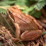 Prioridades urgentes para conservar los anfibios WWF