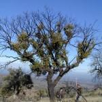 Valoración del entorno un año después del fuego del Alt Empordà