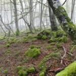 El MAGRAMA apuesta por los Bancos de Biodiversidad