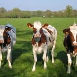 La Ganadería Ecológica registró en 2012 un incremento del 3,11 por ciento