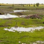 Ecologistas solicitan la inclusión de los Ojos del Guadiana en el PN de las Tablas de Daimiel