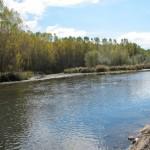 La restauración ambiental del río Órbigo, finalista en los European Riverprize