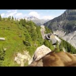 #DiaAves : Flying eagle point of view
