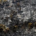 CSIC demuestra la utilidad de la paja para la regeneración de suelos incendiados