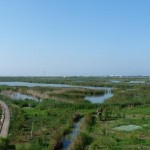 Life+ 12 Albufera: gestión integrada de sus humedales artificiales