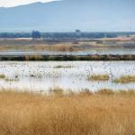 Los humedales de las zonas semiáridas se adaptan peor a los cambios en período seco