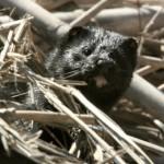 MAGRAMA pone en marcha un Grupo de Trabajo de Especies Exóticas Invasoras