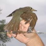 """Valencia suspende los permisos especiales para cazar aves con """"parany"""""""