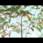 ForestUp, la aplicación que permite dar un paseo virtual por el bosque