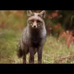 Guadalquivir, el primer largometraje español de naturaleza