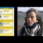 Las Aves de España App