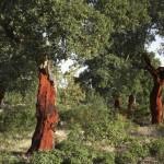 MAGRAMA presenta un Plan de Activación del Sector Forestal