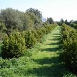 Andalucía respalda la producción ecológica con 773.692 euros en ayudas
