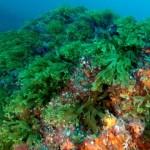 El MAGRAMA abre a consulta pública la propuesta de cinco nuevos LIC marinos
