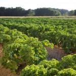 Presentada la Estrategia para el apoyo a la Producción Ecológica