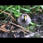Día de las Aves Migratorias 2014