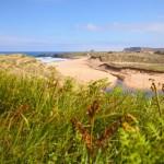 La UE financia un proyecto para recuperar la biodiversidad de las dunas de la costa cantábrica