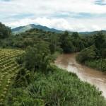 La CE ayudará con 800 millones de euros a proteger la biodiversidad en países subdesarrollados