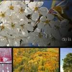 Árboles y orquídeas ibéricos, dos nuevas webs para conocer nuestra flora