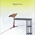 Aves y tendidos: Del conflicto a la solución