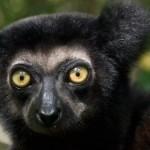 La UICN advierte sobre un aumento del número de especies amenazadas