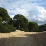 Andalucía paraliza el almacén de gas de Doñana hasta tener más información