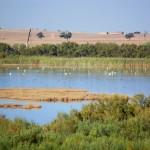 Expertos debaten cómo restaurar ambientalmente la laguna de Los Tollos