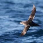 Declaradas 39 ZEPAS marinas