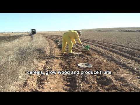 Investigan la eficacia de la agrosilvicultura en la for Viveros fuenteamarga