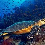 Abierto a consulta pública el LIC de Lanzarote y Fuerteventura