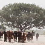 Europa y la FAO ponen en marcha el programa Acción Contra la Desertificación
