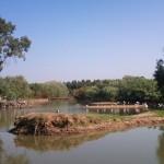 Restauración ambiental: De gravera a humedal