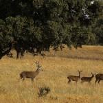 Ecologistas denuncian las últimas enmiendas a la Ley de Parques Nacionales