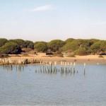 Aplazadas las enmiendas al proyecto de Ley de Parques Nacionales