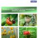 agricultura ecologica huertos