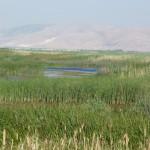 Los sitios más amenazados de biodiversidad de agua dulce en el Mediterráneo